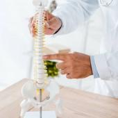 oříznutý pohled na lékaře ukazující na zadní model na klinice