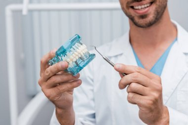 cropped view of cheerful dentist holding dental instrument and tooth model in hands