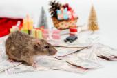 selektiver Fokus kleiner Ratte in der Nähe von Geld und Geschenken isoliert auf Weiß