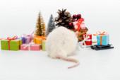 Selektiver Fokus der Hausratte in der Nähe bunter Geschenke isoliert auf Weiß