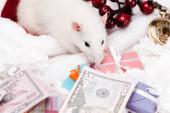 selektiver Fokus der kleinen Maus in der Nähe von Geschenken und Dollar-Banknoten