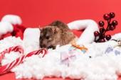 szelektív középpontjában az egér Santa hat közelében édes édességet vesszők és ajándékok izolált vörös