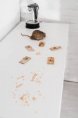 small rat near mousetraps with cube of cheese near kettle on table