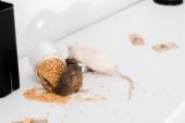 selektivní zaměření malých krys v blízkosti skleněné sklenice s hráškem na stole