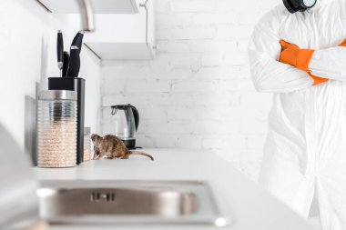 cropped view of exterminator standing with crossed arms near rat on table