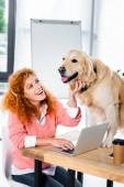 Fotografie atraktivní žena usmívající se a hladil roztomilou zlatou extraktor v kanceláři