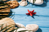 mušle, hvězdice a palmové listy na dřevěném modrém pozadí