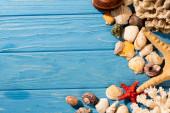 vrchní pohled na mušle, hvězdice a korály na dřevěném modrém pozadí