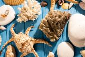 vrchní pohled na kameny, korály a mušle na dřevěném modrém pozadí