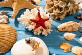 červená hvězdice, korály a mušle na dřevěném modrém pozadí