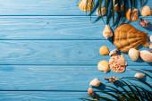 vrchní pohled na mušle a palmové listy na dřevěném modrém pozadí