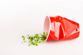 red disposable cup and green plant on white background