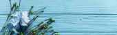 horní pohled na dřevěné modré pozadí s kvetoucími větvemi a květy, panoramatický záběr