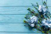 top view of wooden blue background with blossoming branches and flowers