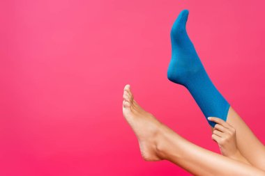 Cropped view of woman putting blue sock on leg isolated on pink