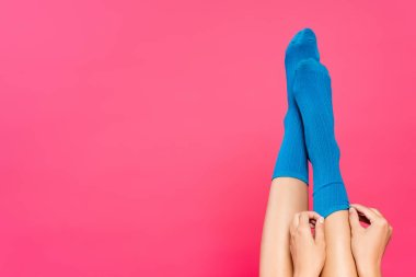 Cropped view of woman putting blue socks on legs isolated on pink