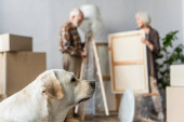 blurred view of senior couple unpacking stuff with dog on foreground