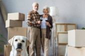 Photo blurred view of senior couple holding glasses of wine and labrador dog on foreground