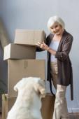 Lächelnde Seniorin faltet Pappkartons und schaut Hund an, bewegtes Konzept