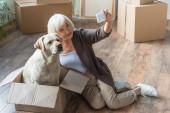 senior žena přičemž selfie se psem sedí v krabici