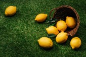 Fotografie close up image of lemons with leaves and wicker basket on green lawn