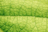 macro texture of green floral leaf