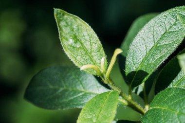 fresh leaves of green seasonal plant