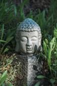 Fotografie Hlava Buddhy na kameni s zelenými rostlinami a okolí