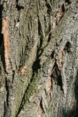 vertikale Struktur der trockenen Baumrinde mit Tageslicht
