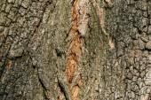 horizontaler Hintergrund aus grauer Baumrinde