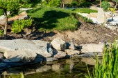 holubice, stojící na skále poblíž klidný rybník v létě na slunci
