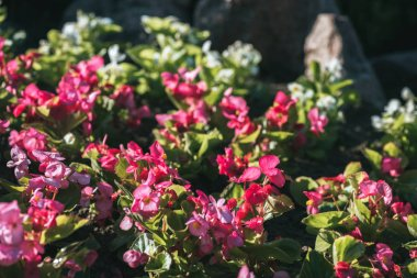floral texture with pink bloom with sunlight