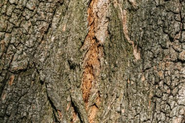 horizontal background of grey tree bark