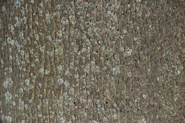 horizontal texture of dry tree bark