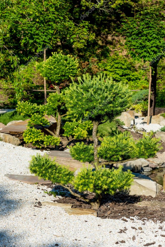 green coniferous trees growing on rocks in summer