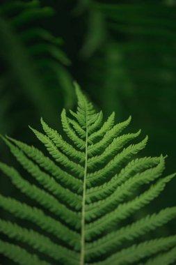 Green fern leaf on blurred nature background