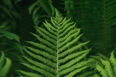 Lush green background with large fern leaf
