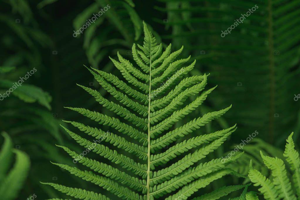 Lush green background with large fern leaf