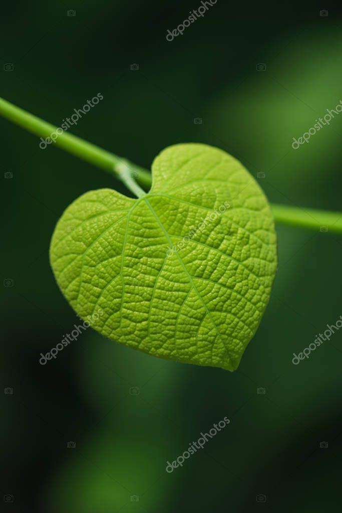 Heart shaped leaf on blurred green background