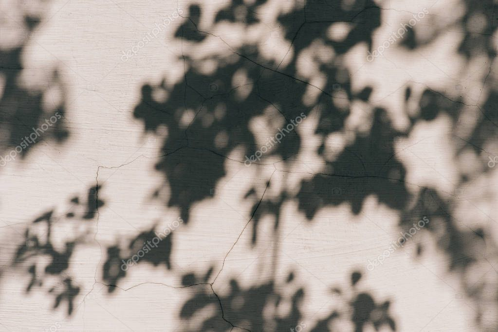 full frame image of wall with shadow of leaves background