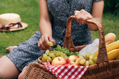 Cropped image of woman sitting on green grass and taking grapes at picnic stock vector
