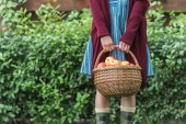 Fotografie midsection view of young woman holding wicker basket with apples