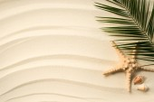 Fotografie top view of arranged palm leaf, seashells and sea star on sandy surface
