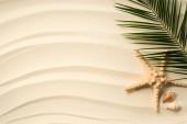 pohled shora uspořádány Palmový list, mušle a sea star na písčitém povrchu