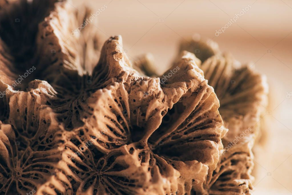 close up view of coral on sandy beach