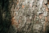 Fotografie close-up view of old grey tree bark background