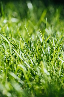 Close-up view of fresh green grass, selective focus stock vector
