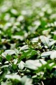 Fotografia Chiuda sulla vista di cespugli con fogliame verde come sfondo