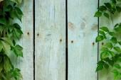 plný rám z dřevěných prken a zelených listů jako pozadí