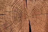 Vollständiger Rahmen aus Holzstumpf als Hintergrund